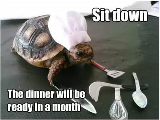 turtle-is-cooking-dinner-slowly